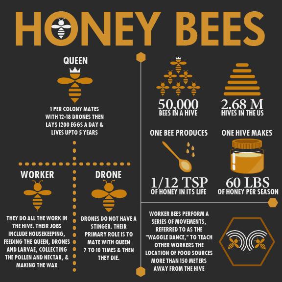 Honey Bee Info-graphic