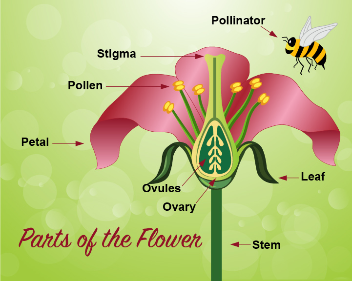 Pollination Infographic
