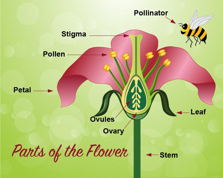 Pollination Infographic