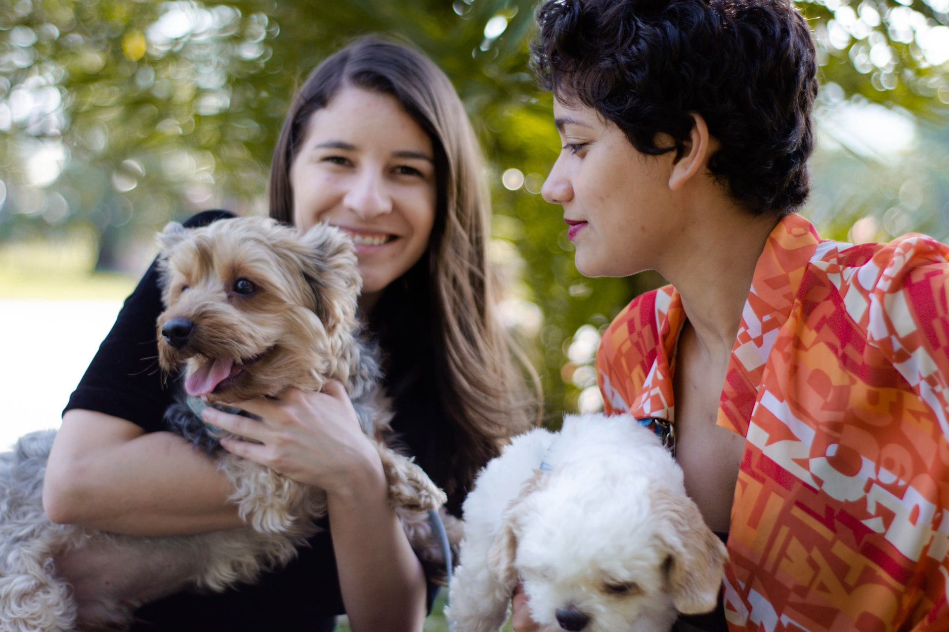 Domain: Singles With Dogs (Dot COM)