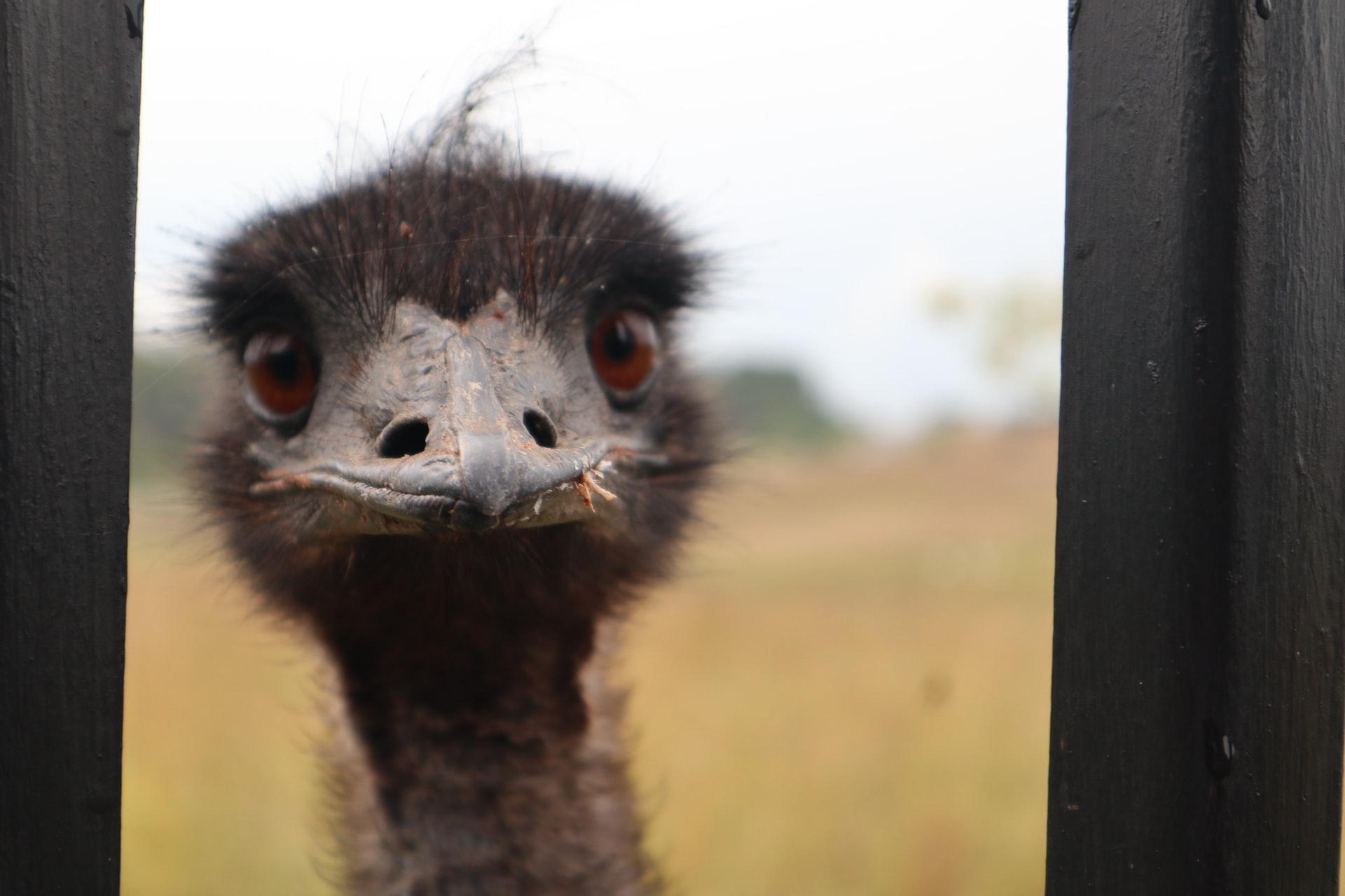 Domain: Loan Emu (Dot COM)